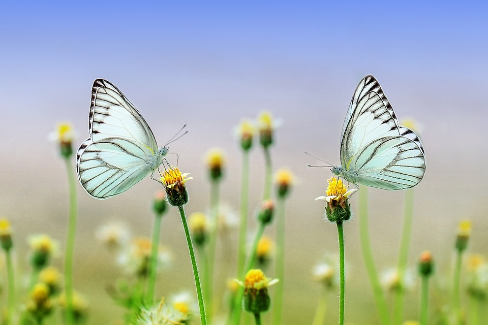 Powerful 5 Day New Year Chrysalis Process and more!