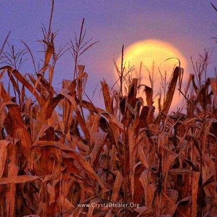 Corn Moon